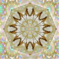 Damsel Fly Nebula