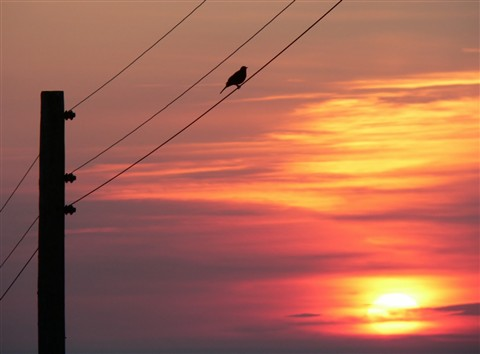 Bird on a wire.