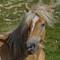 Head of a Horse in the Wild: