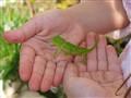 Romi Holding a Lizard