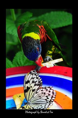 Parrot & Butterfly