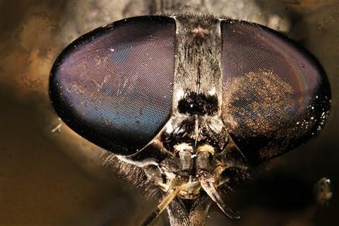 NikonEL50 Big fly