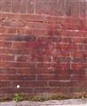 Daisy on bricks
