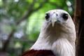 un-angry bird