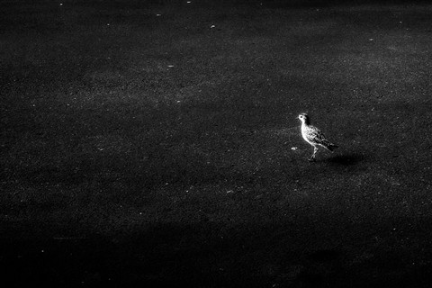 bird on asphalt