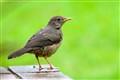 For Birding