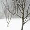 snow birds_8_v2