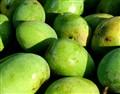 Bombay Green Mango