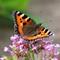 6d butterfly 2