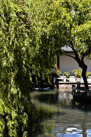 Serenity under a willow tree