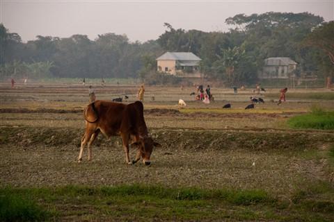 BijanBangladesh00056