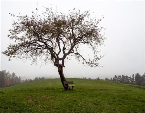 solitair tree in autumn
