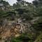 Cypress Grove Point Lobos