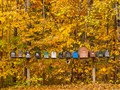 brook road lineup in fall