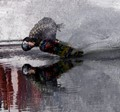 Pond Skimmer