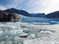 Seal and Glacier Ice