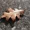 IMG_1226_leaf