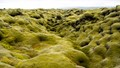 Iceland - Laki vulcano lava field