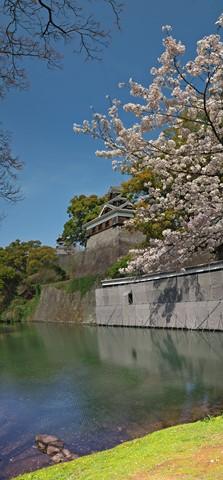 熊本城桜04pano