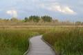 Black River Marsh Boardwalk
