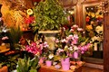 Flower Shop Interior-14