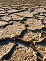 Saline soil