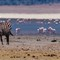 Ngorongoro Shimmer