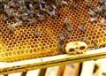 Bees At Home