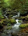 Mossy Mountain Stream