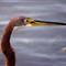 BirdCloseup1280_IMG_3163