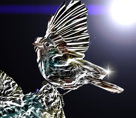glassy bird