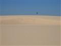Lone Dune Tree