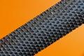 rasp tool P1350354