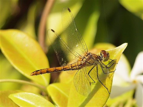 Dragonfly taking a sunbath