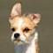 Bennie puppy