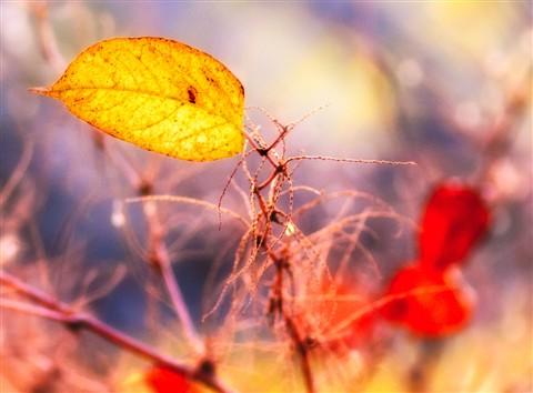 jaykell_2012-11-13