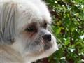 Dog Portraits2