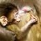Monkey babya