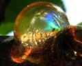 A Psychedelic Bubble?