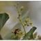Garden Bees_P4057296