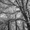 P7260038-DM-b: OLYMPUS DIGITAL CAMERA