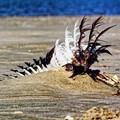 Wing of a dead seagull, north sea shore