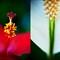 Delray Beach Florals