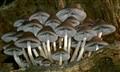 fungi on rotting tree trunk