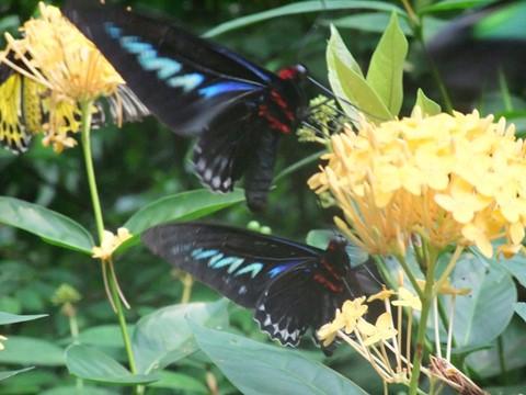 Butterflies Garden 06.05.10--