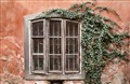 Ivy and Old Window