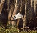 ibis, st. martin la