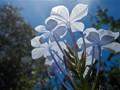 Blue under Blue