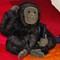 My FAO Schwarz monkey