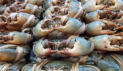 PC223373 p56 crabs